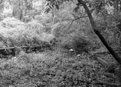 black and white woods area where the rough roads paths were once located at the Packard Proving Grounds Historic Site